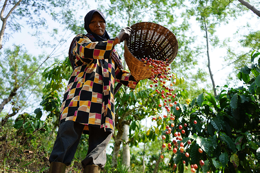 Rwanda Twongere Kawa Coko